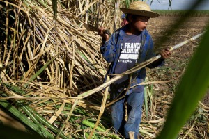 bolivia-child-work-cane5