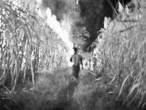 Burma_s_sugarcane_nomads-2