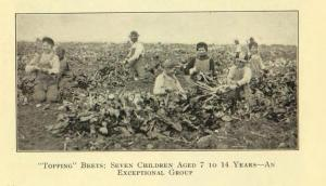 Children Topping Beets in Colorado