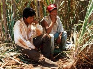 Guarani cane cutters
